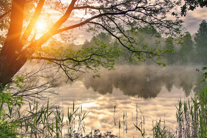 Misty dawn over the spring lake