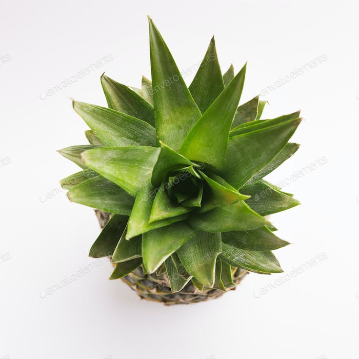 Pineapple top view isolated on white
