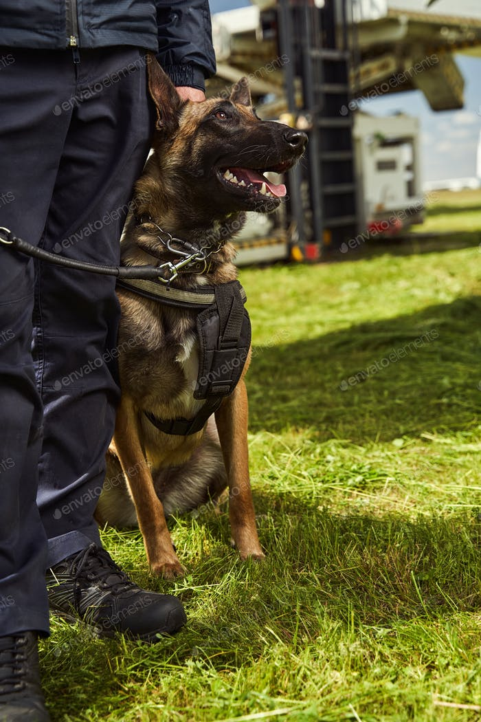 Security police dog on duty with officer at airfield