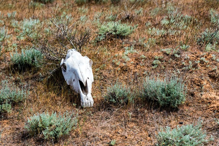 Horse skull in grass close up