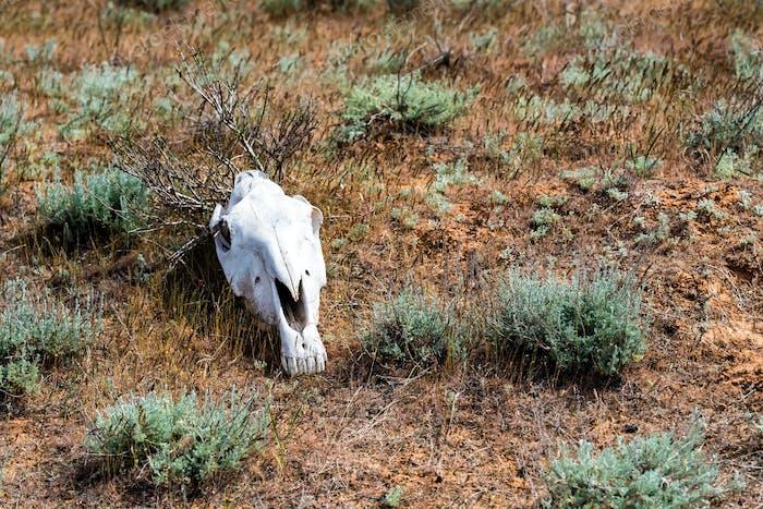 Pferd Schädel im Gras Nahaufnahme