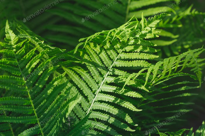 Macro photography of a fern in a tropical forest. Nature background.