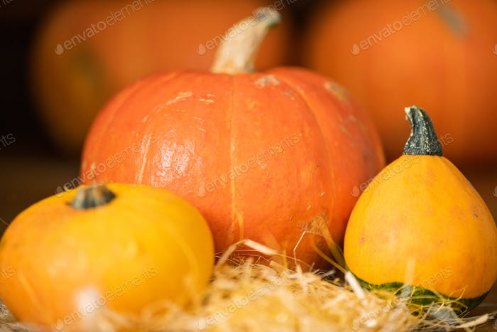 Big orange pumpkin and two smaller yellow ones on pile of straw