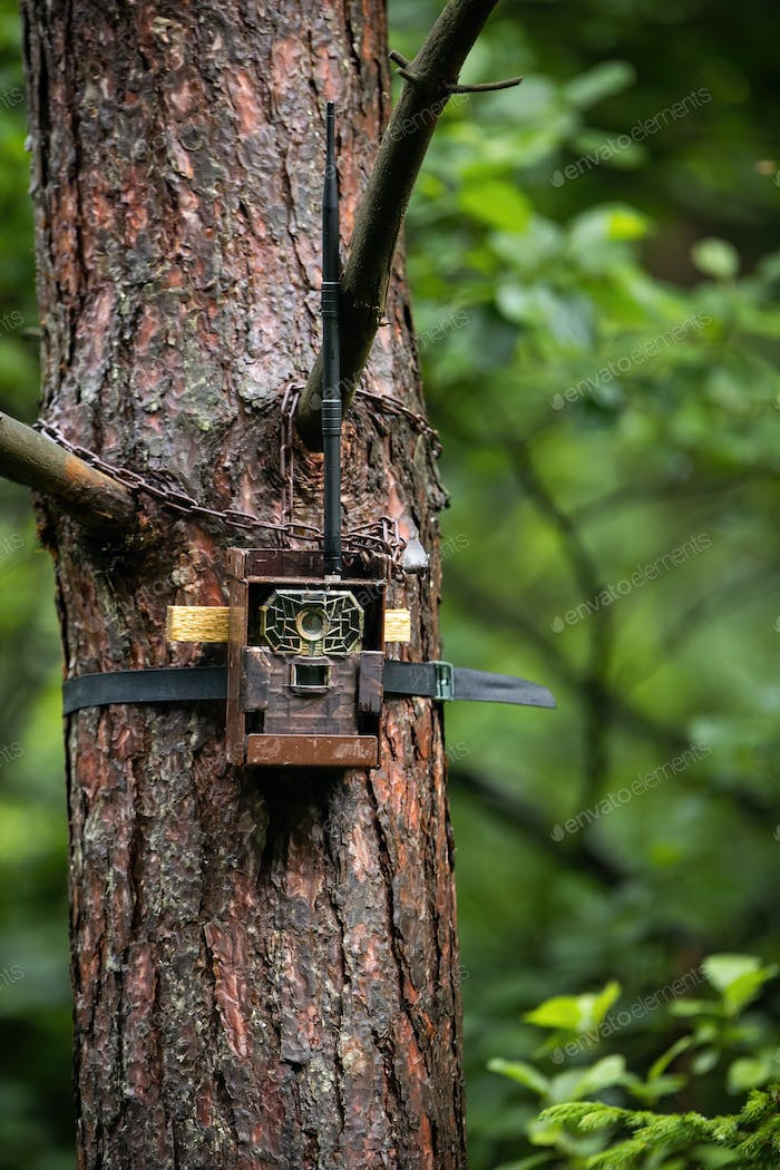 Camera trap attached to a tree with lock in summer forest