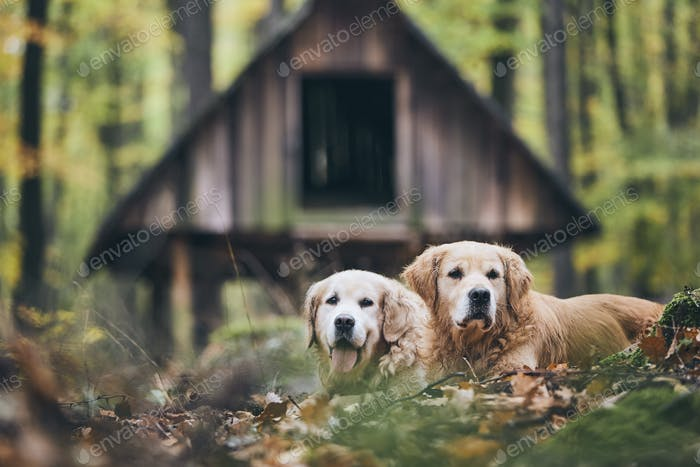 Ein paar alte Hunde