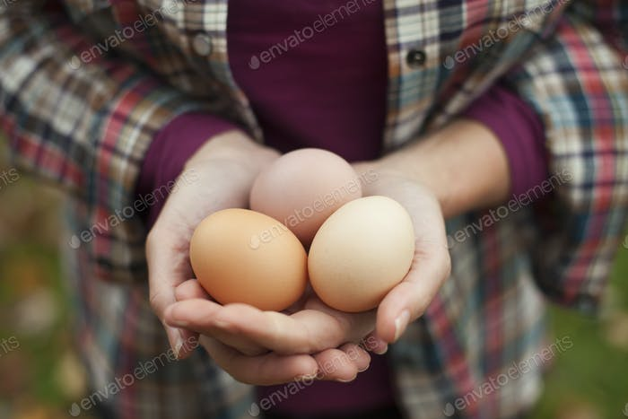A woman holding a clutch of freshly laid hen's eggs.