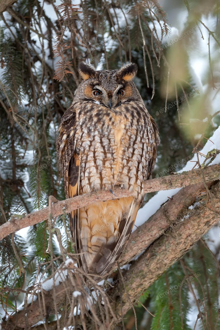 Eurasian eagle owl on branch