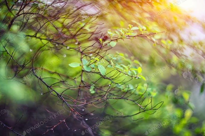 twinkling lights vivid color blurred bokeh spring from leaf back