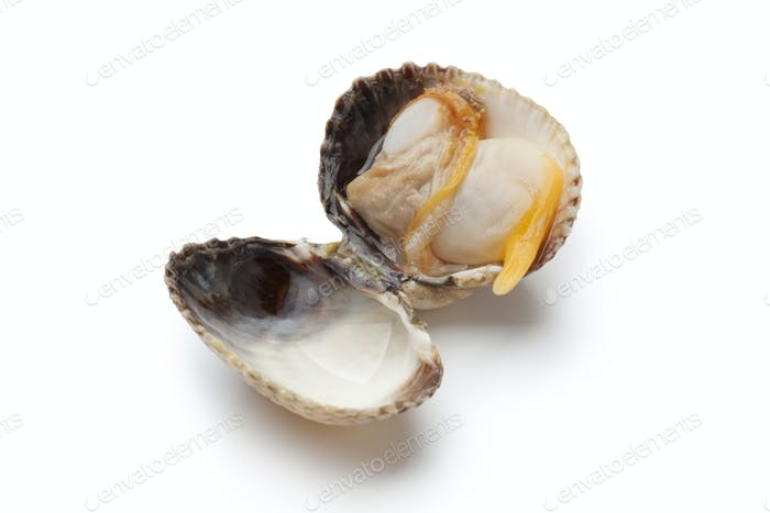 Whole single fresh cooked cockle