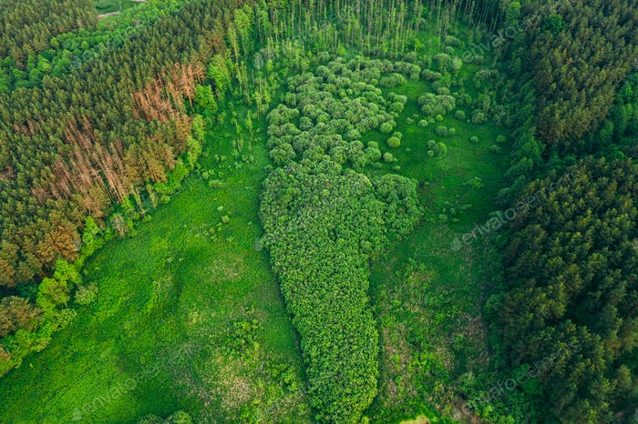Aerial View Green Forest Woods Landscape In Sunny Spring Evening