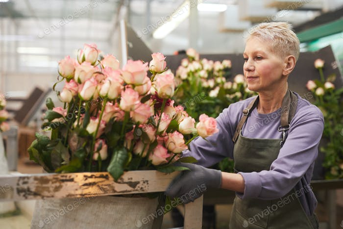 Mujer plantando rosas