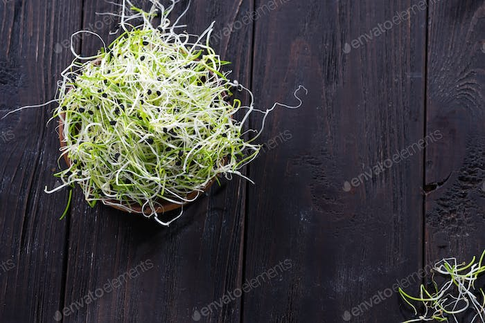 Fresh micro greens onion, sprouts for healthy salad. Eating right, stay young