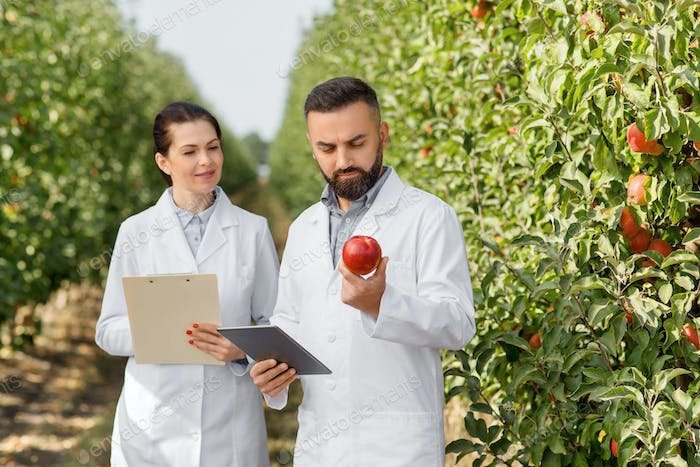 Modern cultivation of eco fruit in garden, business and seasonal harvest