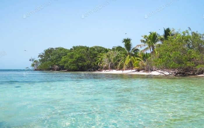 Tropical Island with Palm Trees in Belize