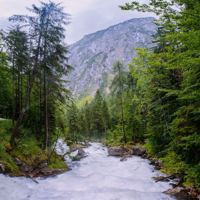 Bergbach im Wald