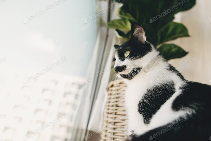 Cute kitty with green eyes sitting at cozy pillows and plants