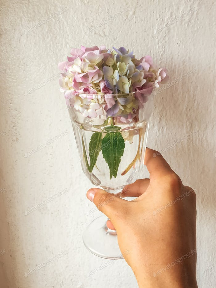 Beautiful Hydrangea colorful bouquet in wine glass with water, rustic still life