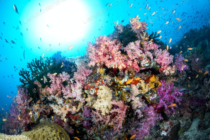 Colorful Underwater Reef
