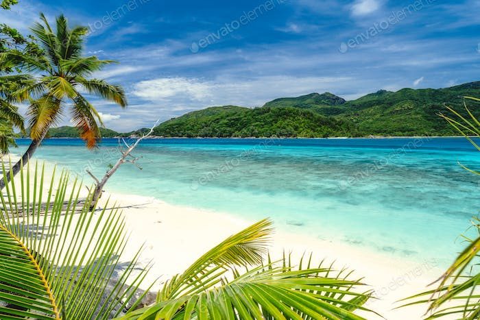 Vacation holiday vibe exotic wallpaper. Palm trees on tropical beach. Blue ocean lagoon and sky with