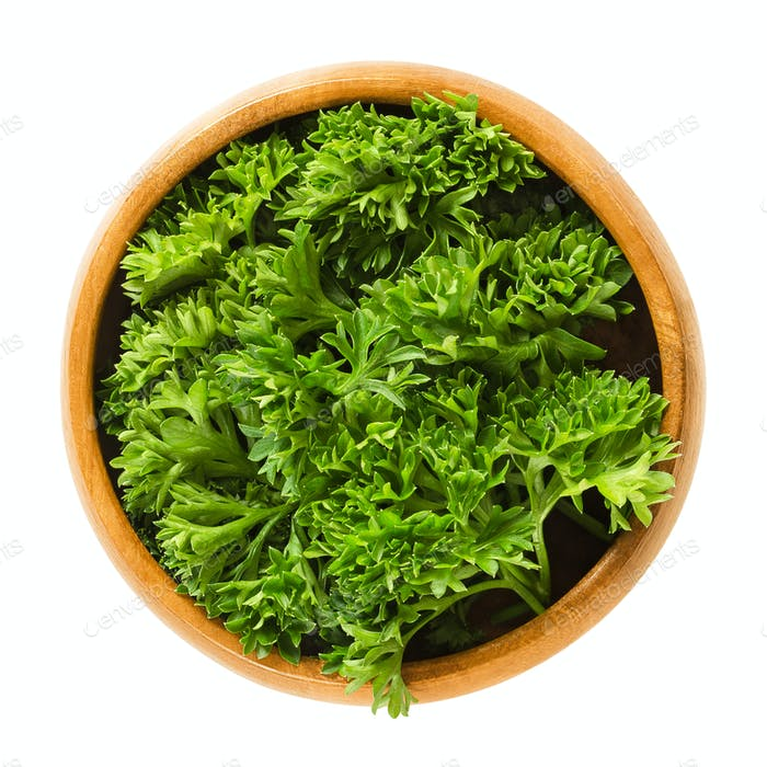 Fresh curly parsley leaves in wooden bowl over white