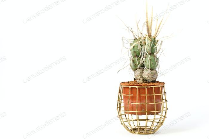 Kaktus in einem Topf Minimalismus Konzept.