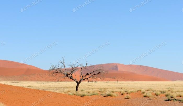 Namib panorama