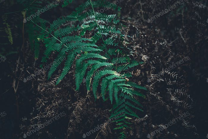 Fern leave in the forest, autumn background.