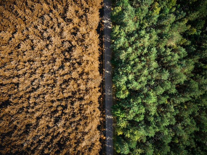 Autumn fall over forest, top down drone view