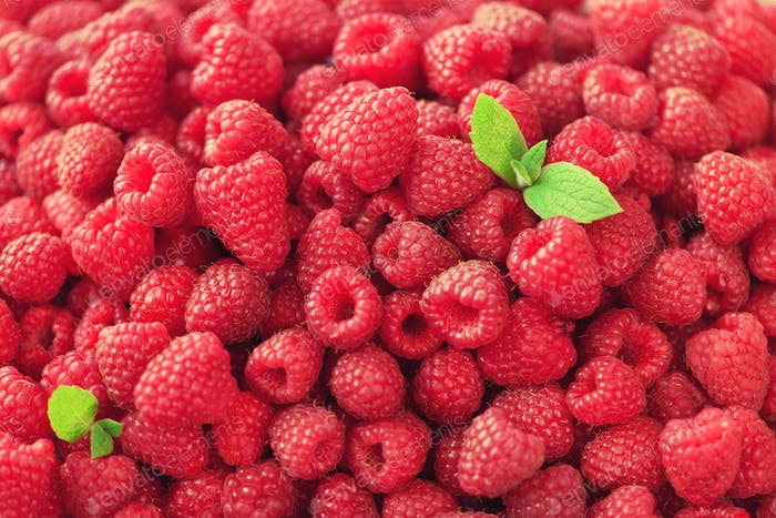 Fresh organic raspberries with mint leaves. Fruit background with copy space. Sunny summer and
