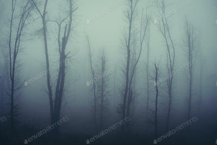 Mysteriöser heimgesucht nebligen Wald