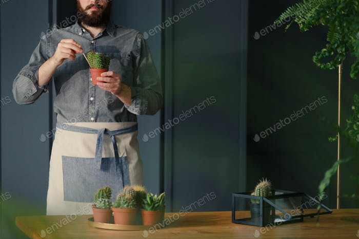 Man with gardening hobby replanting cacti in grey interior