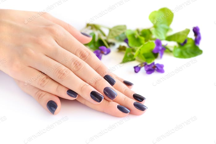 Hands of a woman with dark manicure on nails and violets on a wh