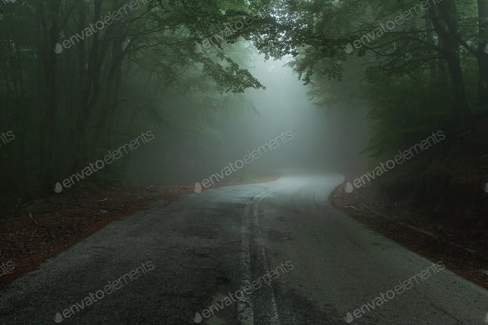 Road Through Misty Forest