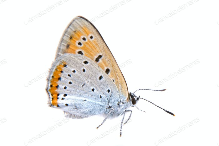 Colored butterfly on a white background