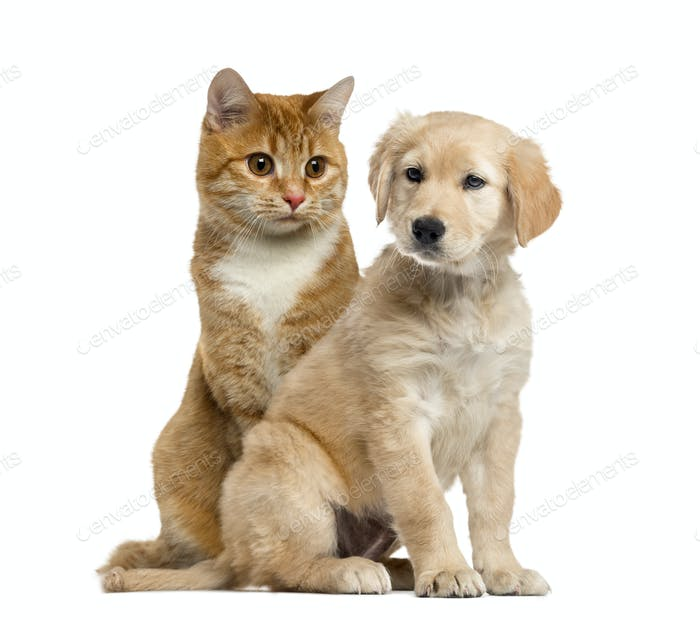 Dog puppy and cat sitting, isolated on white