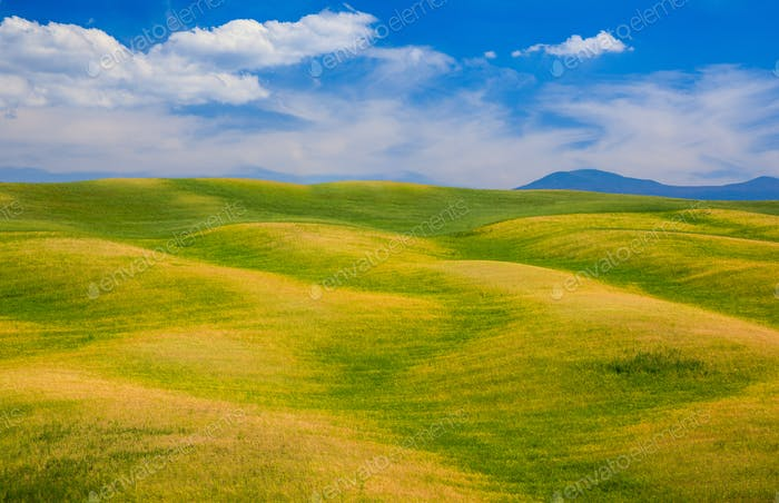Rolling hills, green fields in Tuscany, Italy