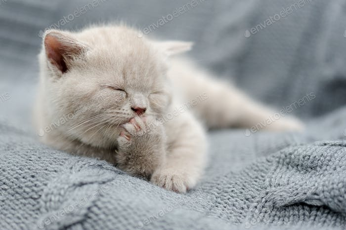 Little kitten on gray cloth