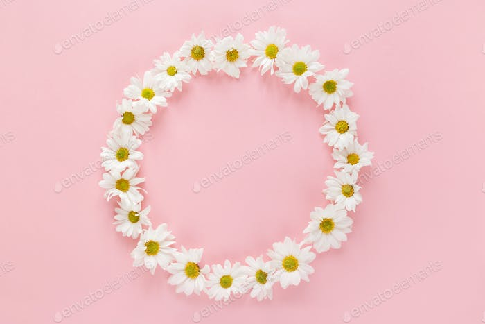 Round frame made of white flowers buds on pink background