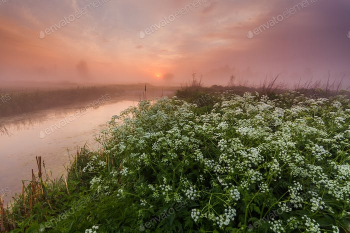 Thumbnail for Misty dawn on the river bank with flowers