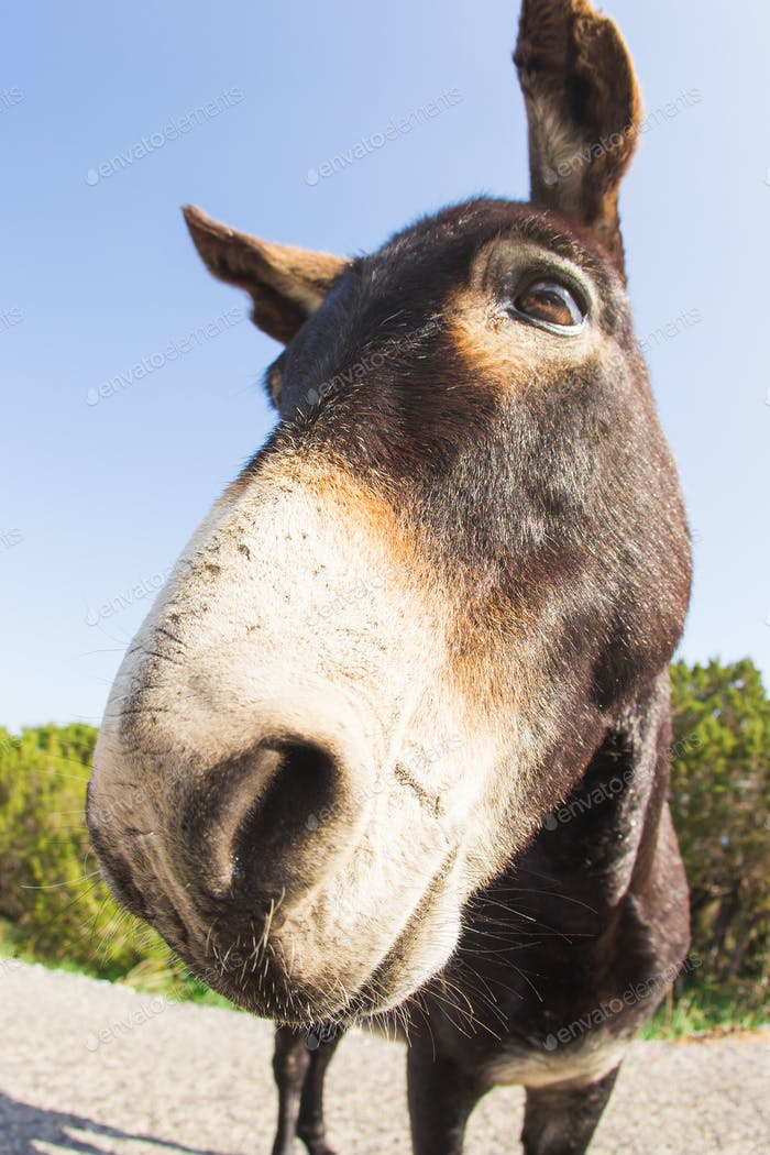 funny donkey looking at the camera