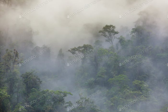 Foggy jungle