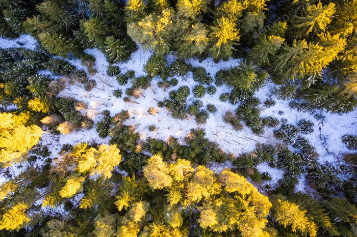 Winter forest aerial view from above during sunset