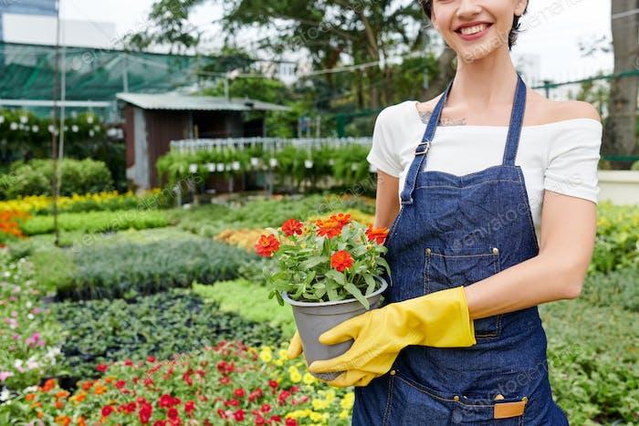 Garten- und Gartenbaukonzept