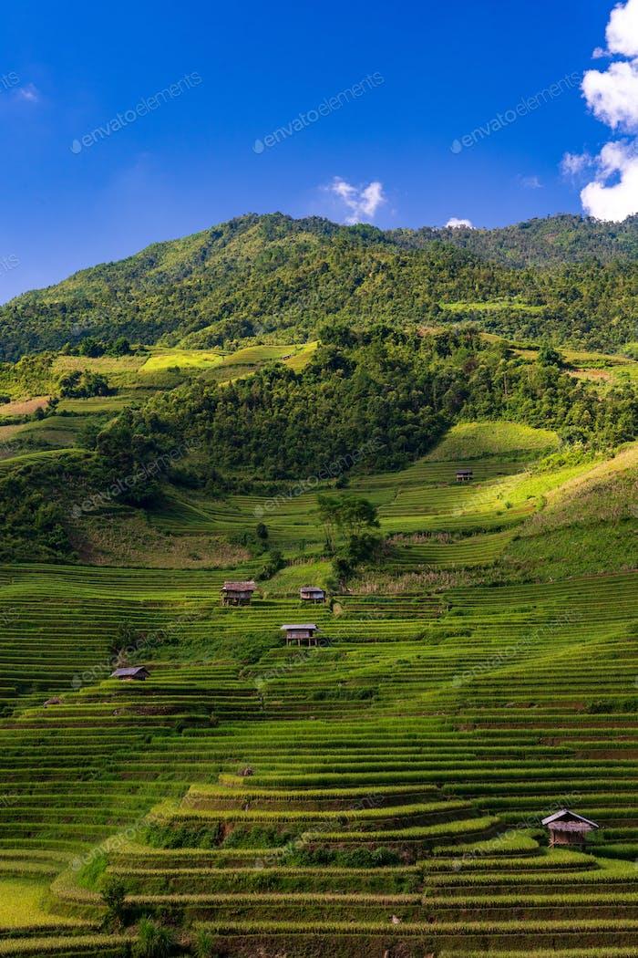 Reihen-Reisfelder, Mu Cang Chai, Yen Bai, Vietnam