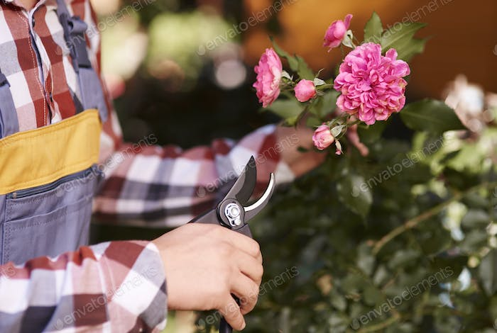 Male human hand pruning flower