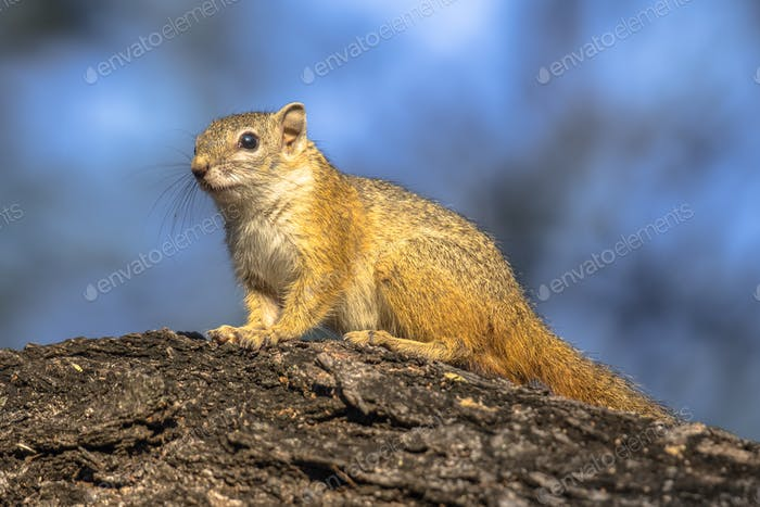 Tree squirrel sitting on branch
