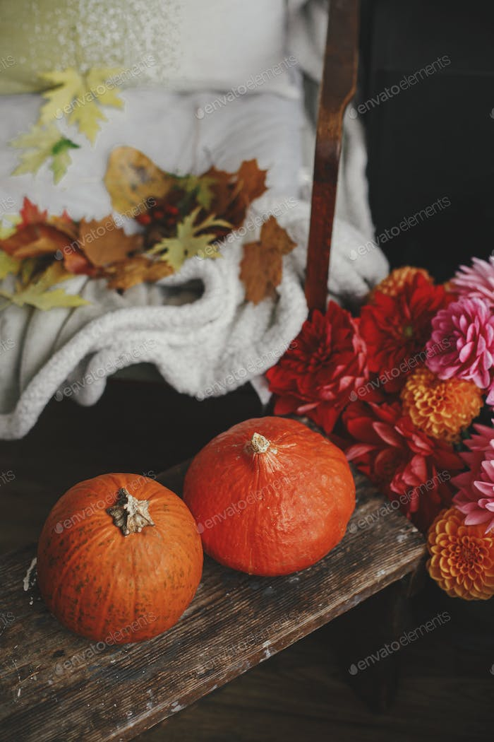 Beautiful pumpkins on wooden bench, colorful dahlias, leaves on cozy rustic chair. Autumn slow life