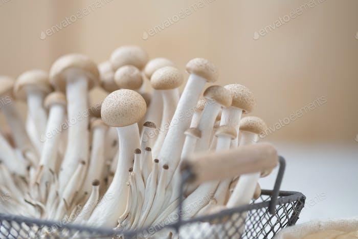 Buna shimeji mushroom