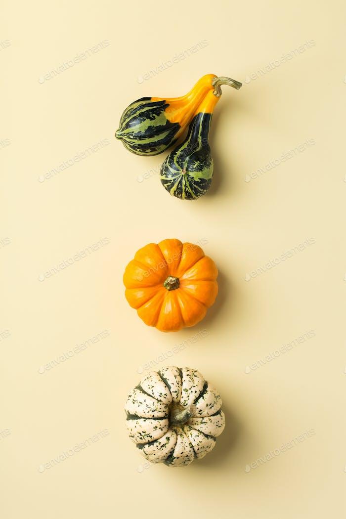 Herbst Herbst Thanksgiving Tag Zusammensetzung mit dekorativen Kürbissen