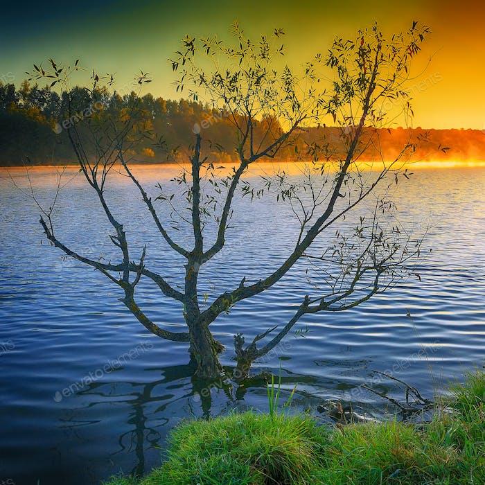 Einsamer Baum wächst in einem Teich bei Sonnenaufgang.